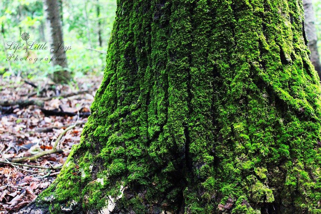 moss_on_a_tree